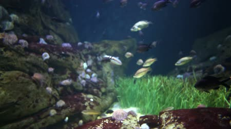 podwodny swiat : shot of fish and sealife in an aquarium