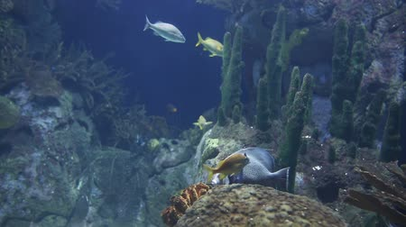 reef life : shot of fish and sealife in an aquarium