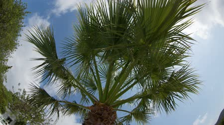 coconut palm tree : looking up to a palm tree and blue sky