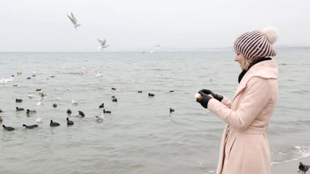 megváltás : A woman feeds swans, ducks and seabirds. Stock mozgókép