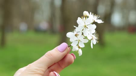 güzelleşmek : A female hand holds a spring flower against the backdrop of a lawn. Stok Video