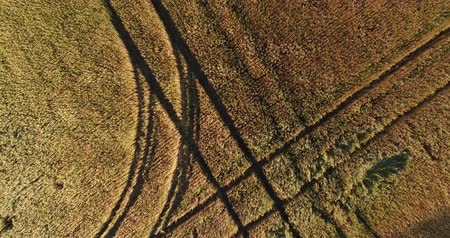 aerialphotography : Aerial: a large wheat field. Rye, corn, wheat. Agriculture, farm and harvest. Stock Footage