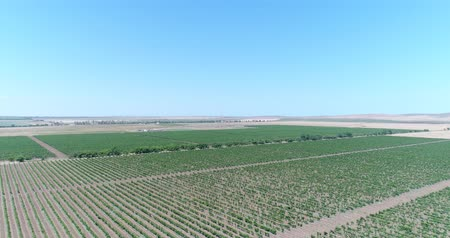 parreira : Aerial photography - grape plantations. Vineyards, beautiful background. Stock Footage