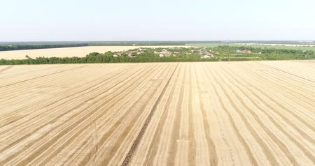 aerialphotography : A large field of wheat. Agriculture, crops, cereals.