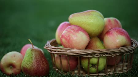 pereira : Apples and pears in a basket on the grass. Fruit basket. Stock Footage