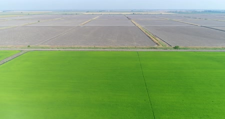 kuban : Aerial view, rice fields, water meadow. Green field, rice cultivation, farm. Stock Footage