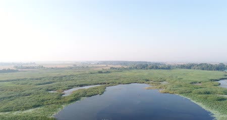 slough : Large lake, pond or pond, aerial video shooting. Stock Footage