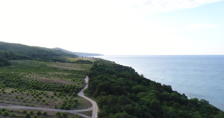 aerialphotography : sea and the green hill with fruit trees.
