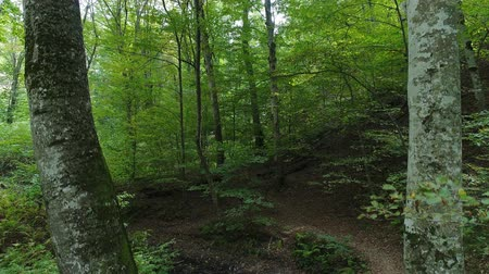aerialphotography : Wild green forest, a trail in the forest, beautiful nature.