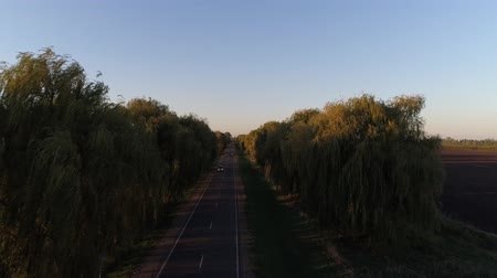 пригород : Country road and trees. Highway at sunset.