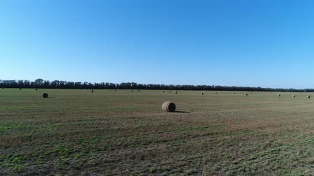 bales : Haystack or roll of hay in the field. Agriculture, hay harvesting. Stock Footage