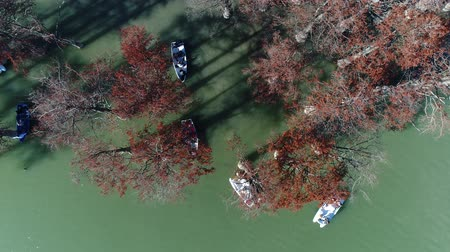 pantanal : Boats and cypress trees in the lake. Sukko, cypress trees lake, Russia. Stock Footage