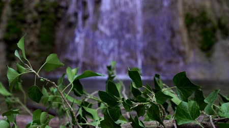leunen : Green leaves on the background of a beautiful waterfall. Beautiful tropical nature.