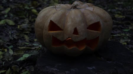 uğursuz : The concept of the Halloween holiday. A sinister pumpkin in the forest. Stok Video