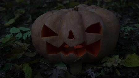 grão : Autumn holiday Halloween. Scary glowing pumpkin. Stock Footage