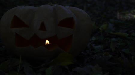 uğursuz : A sinister pumpkin in the forest. The concept of the Halloween holiday.