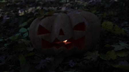 anão : Scary glowing pumpkin, Jacks lantern. Autumn holiday Halloween. Stock Footage