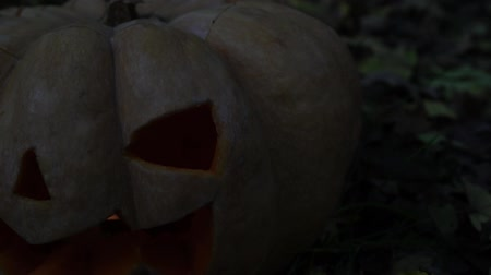 anão : Halloween, scary pumpkin in the dark, close-up. Jacks Lantern. Stock Footage
