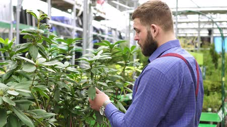 comparar : A man chooses indoor plants in the store.