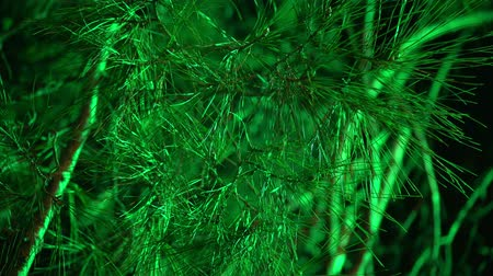 конусы : Green needles and branches of spruce or pine in the dark.