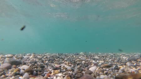 waterline : Marine background, the seabed and small stones, watering video.