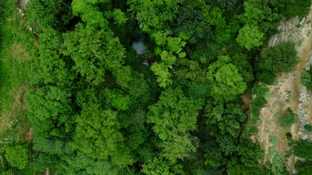 高さ : Aerial view: green forest, trees and rock. 動画素材