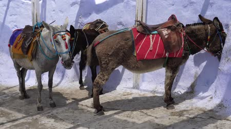 Санторини : Tourist donkeys. Santorini, Greece, traditional tourist excursion. Стоковые видеозаписи