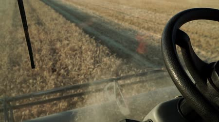 campo grano : Combine harvests wheat in the field, the view from the cab. Filmati Stock
