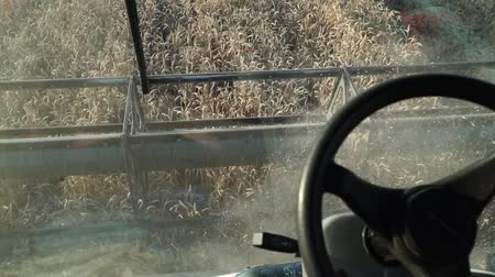 farmers : Combine working in the field. Harvesting wheat. Harvester goes into the field.