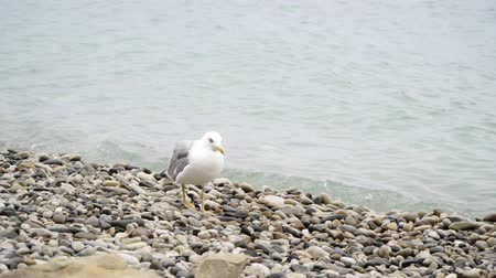 морских птиц : Sea bird sitting on a rocky seashore.