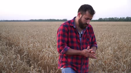 agronomist : A young male farmer is walking on a wheat field.
