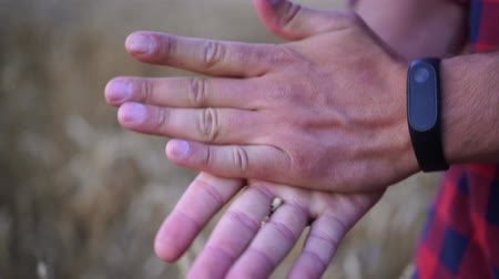 agronomist : A man holds wheat grains in the palm of his hand. Farmer, crop, wheat.