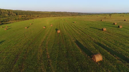 szénaboglya : Aerial: beautiful panorama of a green field, forest, haystacks.