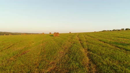 szénaboglya : Beautiful panorama of a green field and rolls of mowed hay. Stock mozgókép