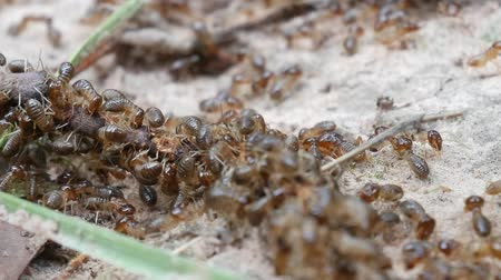tropical insects : Termites are looking for food.