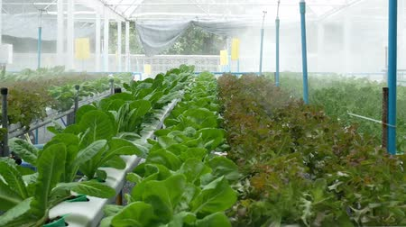 hydroponic : Organic Vegetable Growing.diet food  styles.