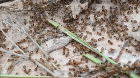 termite : Termites are looking for food.