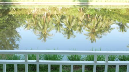 dominikana : Reflect on water of coconut tree.
