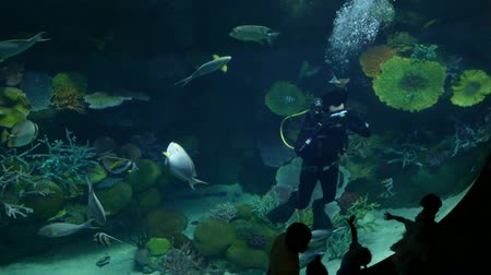 water show : Bangkok, Thailand - December,8 2018 : Aquanaut man and beautiful fish in the aquarium on decoration  of aquatic plants background at Sea Life Bangkok aquarium. Stock Footage
