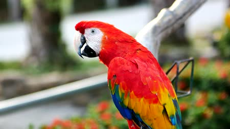 プレデター : Beautiful macaw parrot bird standing on a wooden