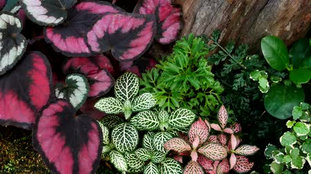 ornamento : Ornamental plants for garden decoration.