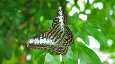 мотылек : Butterfly on tree leaf green nature  background.
