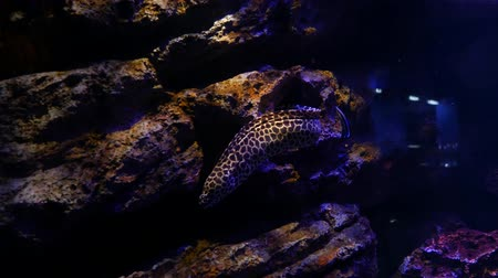 saltwater : Sea eels in fish tank, Aquarium decoration. Moray Eel in fish tank.