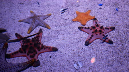 水族館 : Star fish in pond