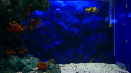 пресноводный : Beautiful fish in the aquarium on decoration  of aquatic plants background.