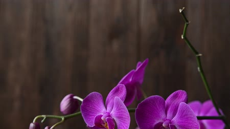 Purple Orchid branch on brown natural background