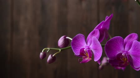 orquídeas : Purple Orchid branch on brown natural background