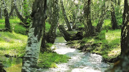mossy forest : mountain river video  for use in presentations, manuals, design, etc. Stock Footage