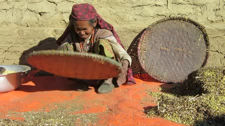 yoksulluk : Old Nepalese lady sifting chickpeas Stok Video