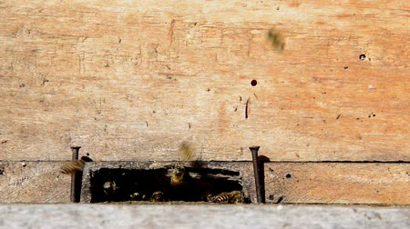 apiary : Bees coming in and out of a wooden beehive Stock Footage